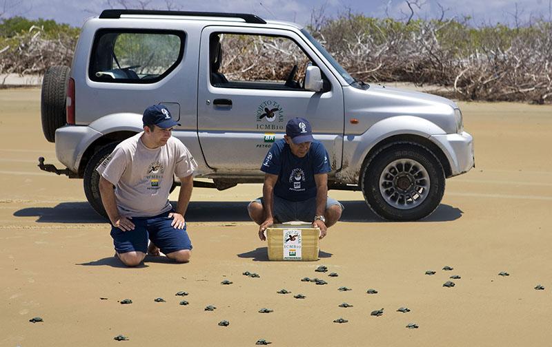 Jimny: ajudando a preservar as tartarugas