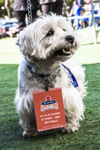 Cães no Jimny Day (Foto: Murilo Mattos)