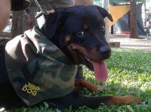 JEEP DOG BRASIL: 1º Feira de Adoção acontece esta semana